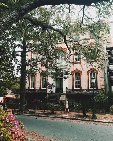 Savannah3